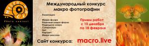 macrolive2