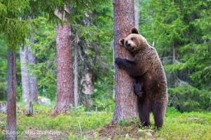 Hozyain lesa